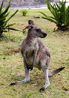Australien 5
