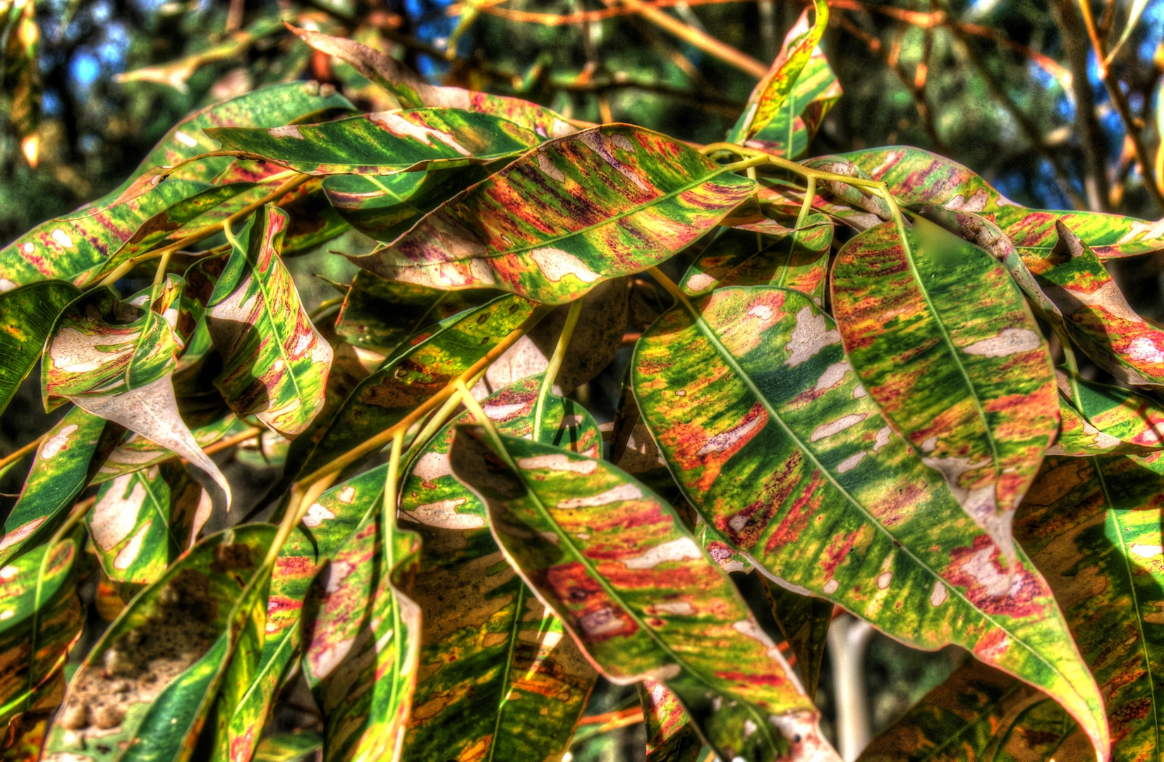 Australien Autumn Gum Leaves Colours