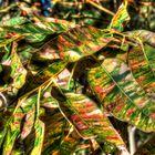 Australien Autumn Gum Leaves Colours