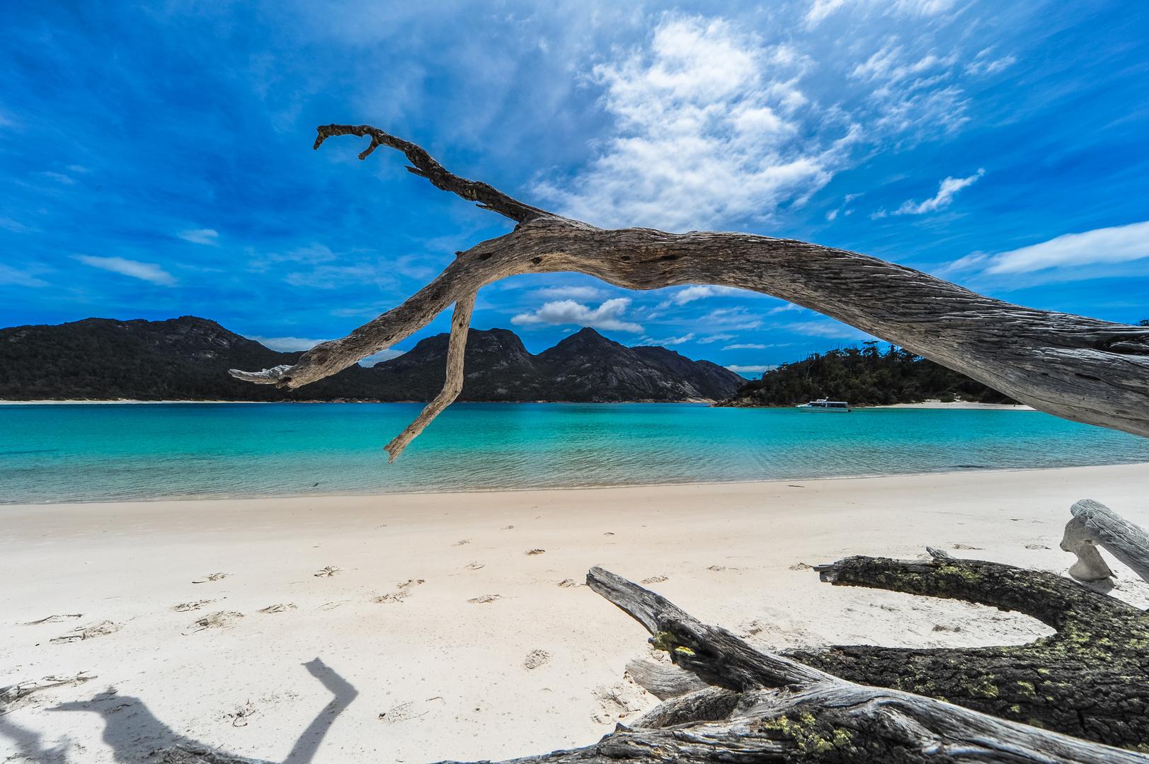 "Australien: Tasmanien, Wineglas Bay ""Treibholz am Strand"""