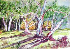 Australische Baumlandschaft
