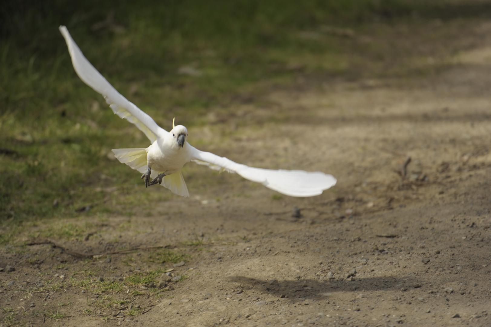 Australische Landung