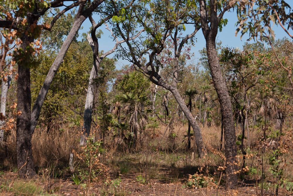 australischer Trockenbusch