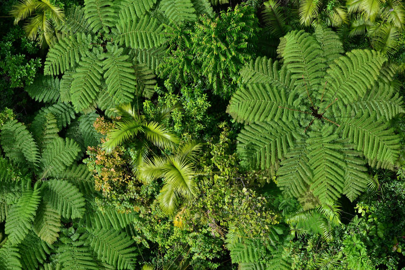 australischer urwald foto  bild  landschaft wald