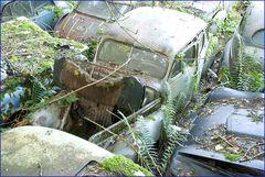 Autofriedhof 4