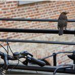 Automne à Bruxelles XIII Moineau et bicyclette