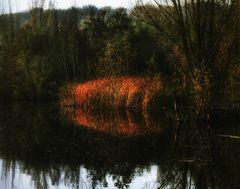 Automne au bord du lac