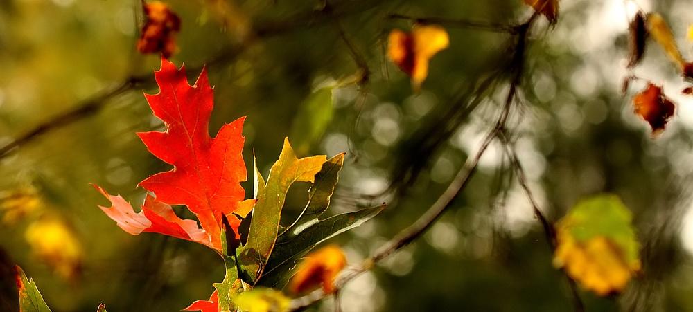 *automne*