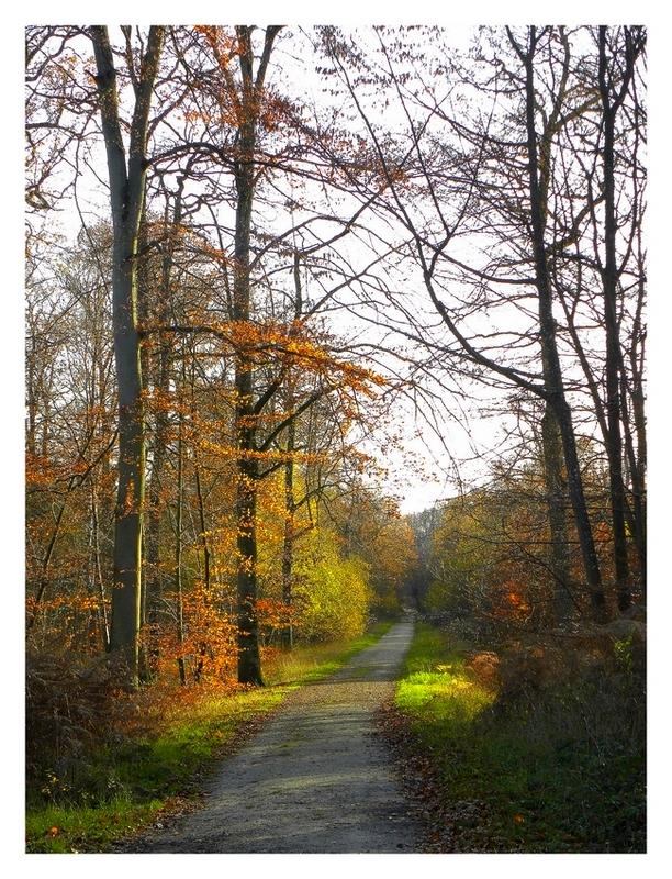 Automne en forêt de Fontainebleau