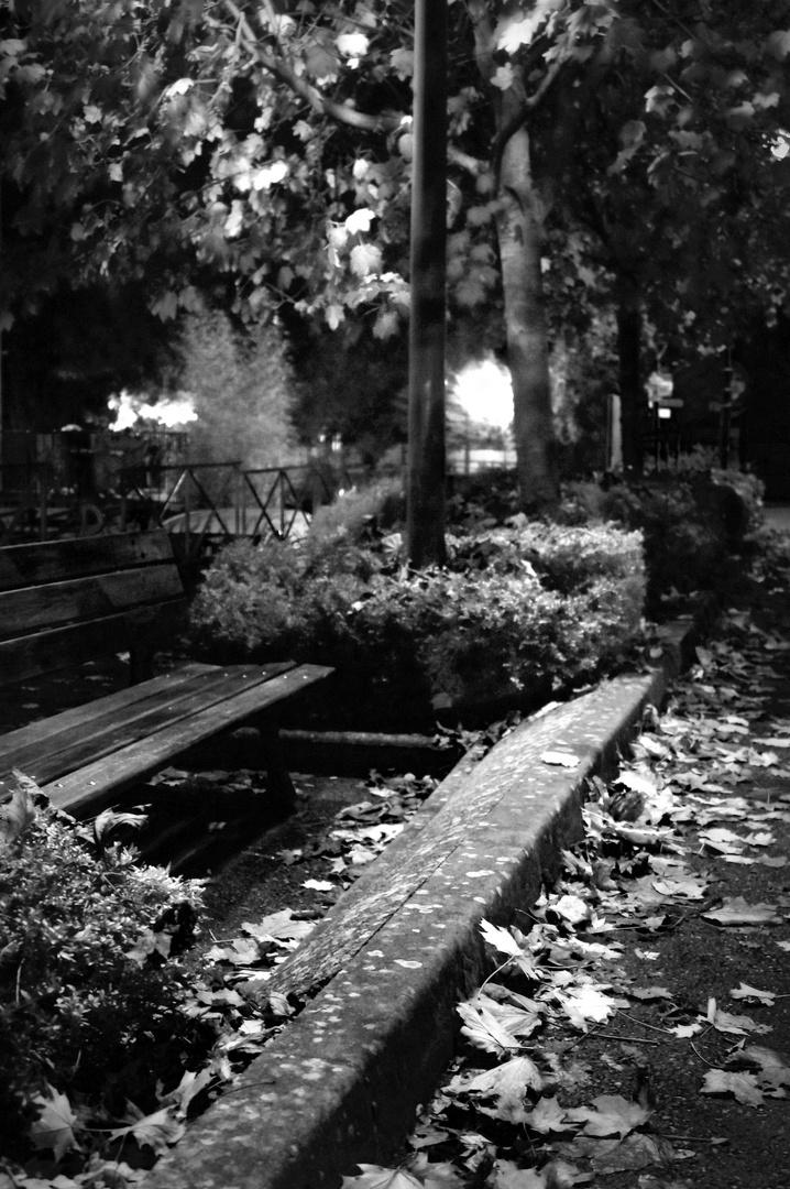 automne en noir et blanc photo et image paysages paysages de campagne nature images. Black Bedroom Furniture Sets. Home Design Ideas