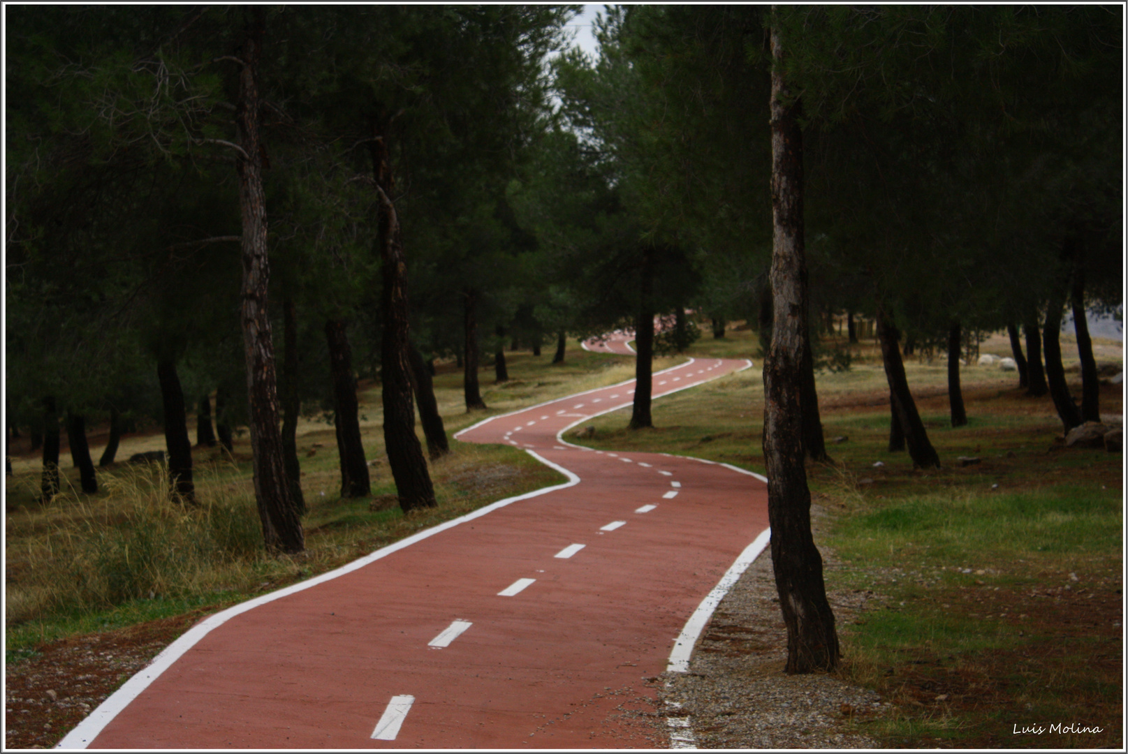Autopista de Ardillas
