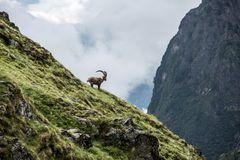 Autour du Mont Blanc (13)