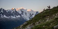 Autour du Mont Blanc (2)