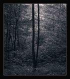 Autum forest evening