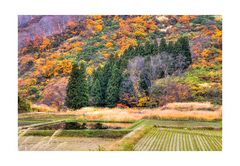 Autum In Japan 2012-7