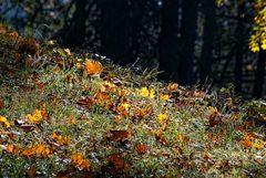 autumn -1-