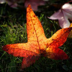 """""""Autumn...."""