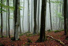autumn -2-