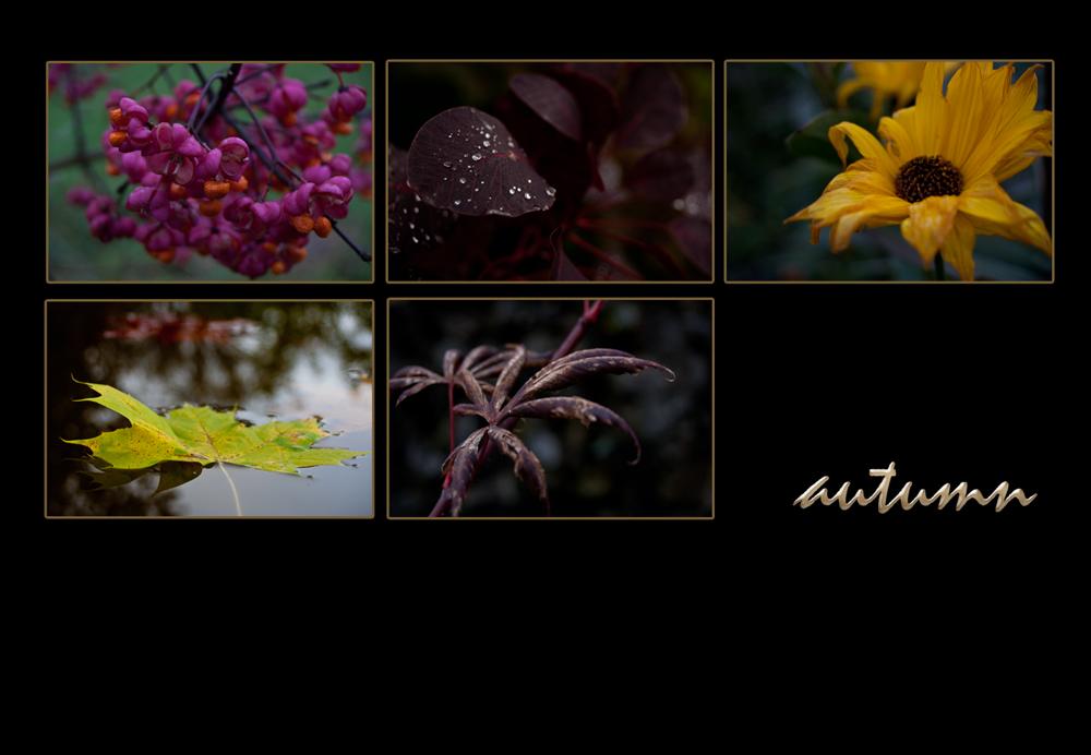 ~~ autumn ~~