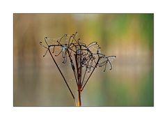 autumn -6-