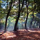 autumn afternoon in the forrest