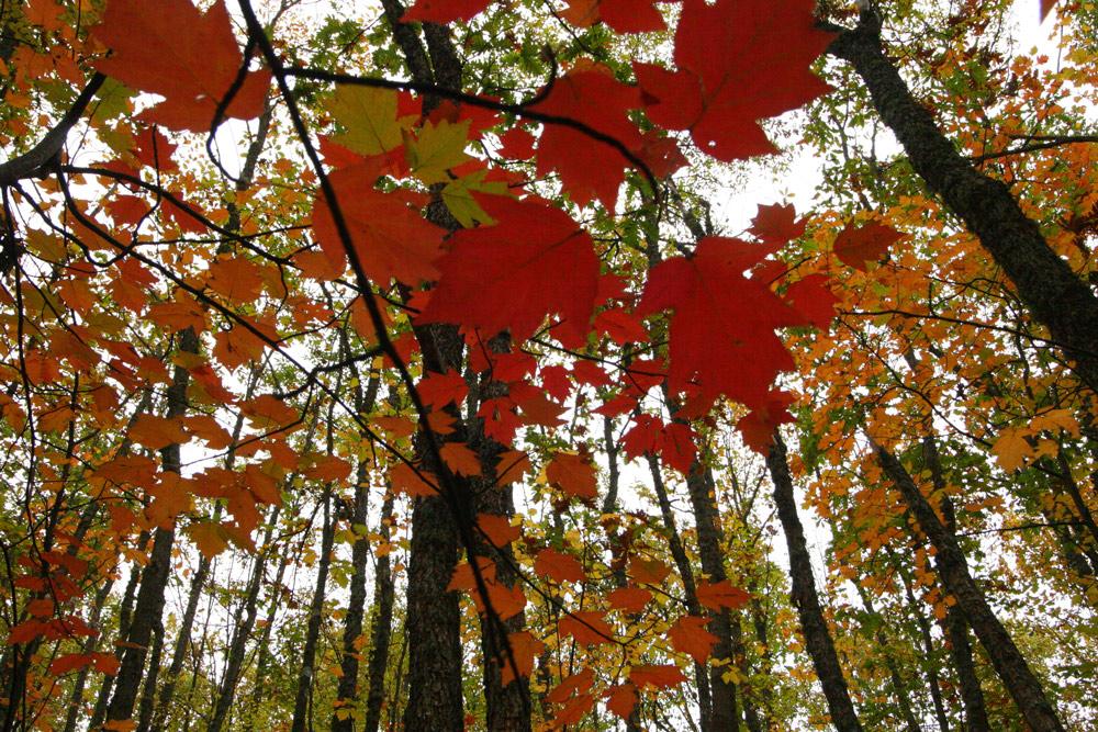 Autumn again...