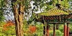Autumn at the Korean Pavillion