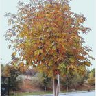 Autumn Attain