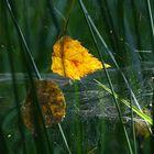 ... autumn captive