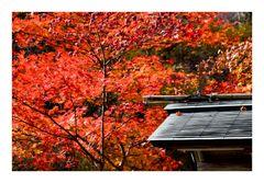 Autumn Color -1
