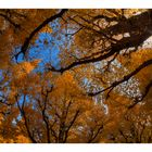 Autumn color-4