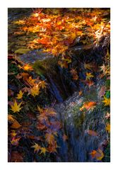 Autumn Color-6