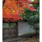 Autumn Color in Kamakura