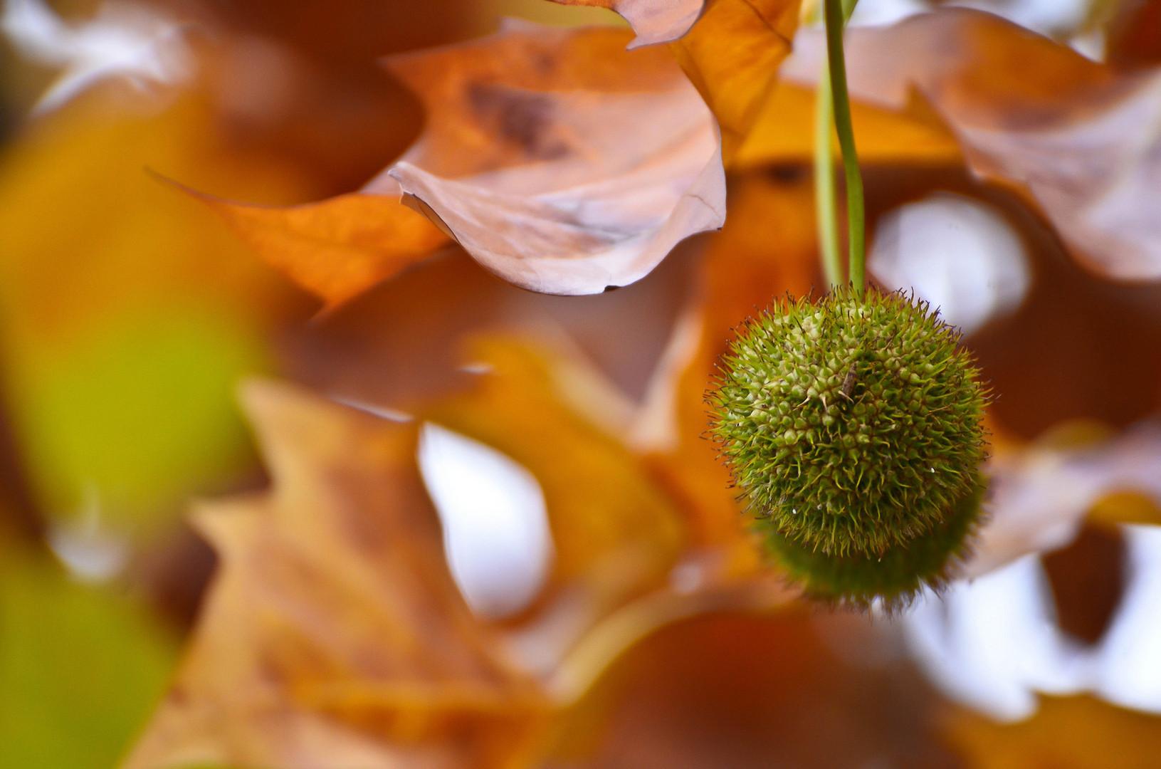 Autumn colors ...