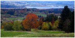 Autumn Colours 1
