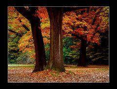 Autumn colours ...