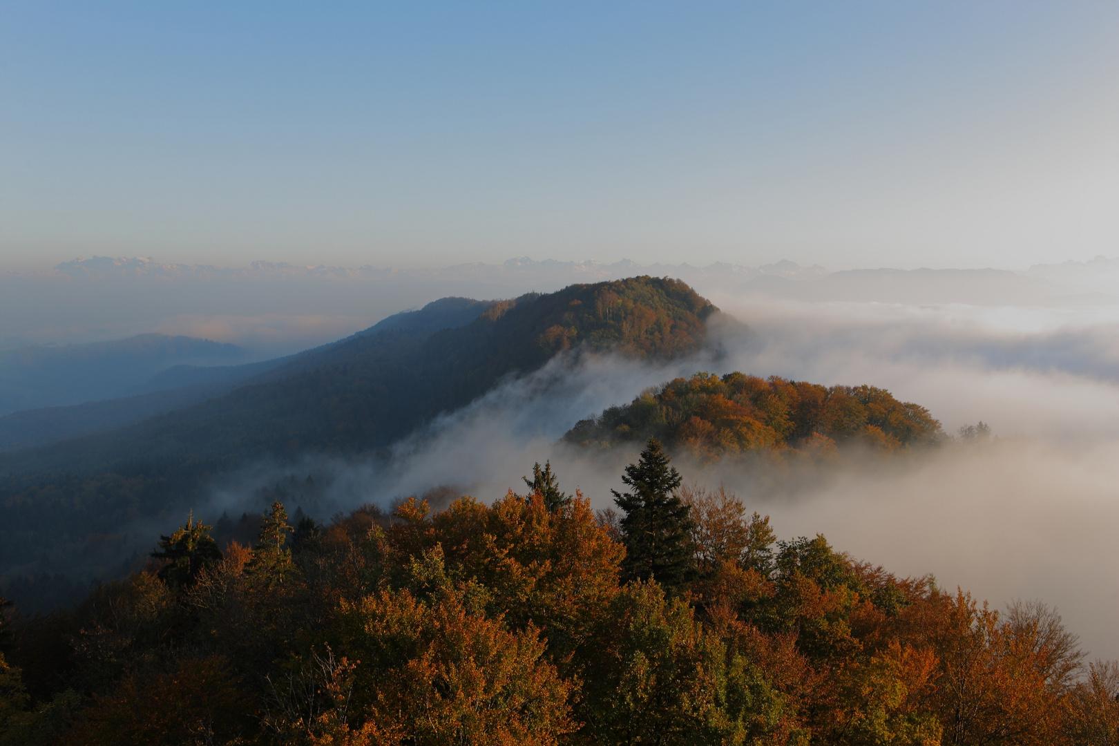 Autumn colours and fog
