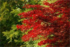 Autumn colours - Herbstfarben