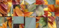 autumn cut-up