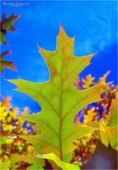 """Autumn Emotion"""