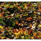 autumn feelings 2