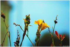 Autumn flowering
