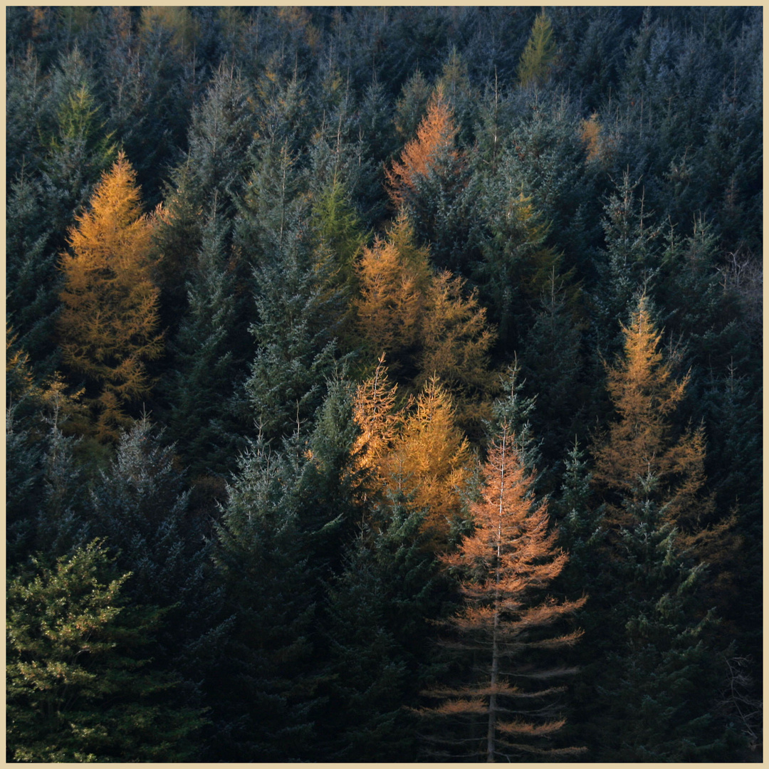 autumn foliage near crackpot hall