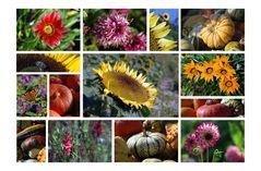 Autumn Garden - Herbstgarten - Jardin autumnal
