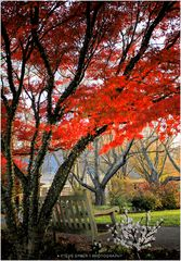 Autumn Idyllic - No.2