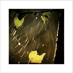 Autumn Impressions [2]