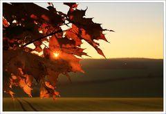 Autumn Impressions [3]