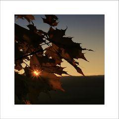 Autumn Impressions [4]