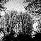 autumn in black & white