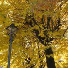 Autumn in Castiglione